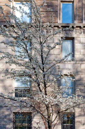Spring on Fifth Avenue 6