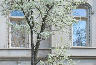 Spring on Fifth Avenue 18