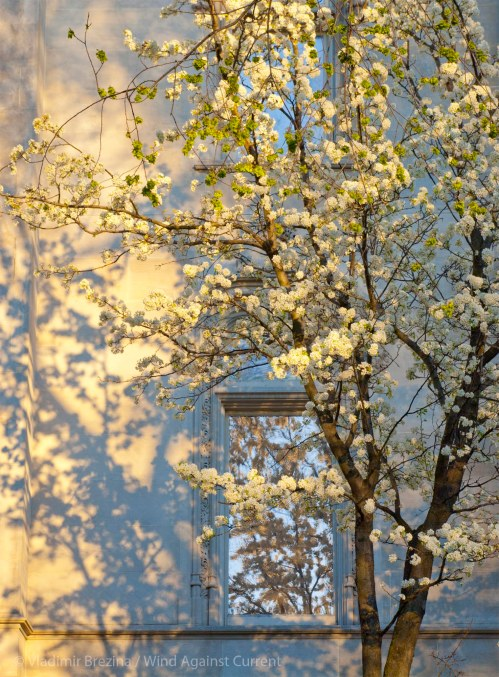 Spring on Fifth Avenue 24