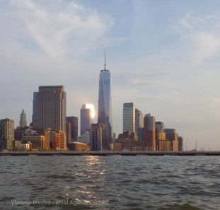 ... lights up the towers of Manhattan