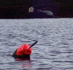 5. Wary seals on Damariscove Island