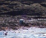 14. Seal pup 1