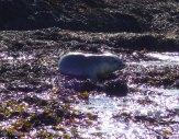 15. Seal pup 2