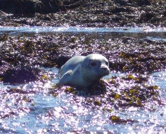 16. Seal pup 3