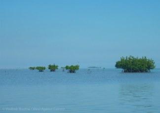 Future islands