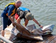 Cardboard-kayak-race-131
