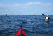 Ederle Swim 2014 56