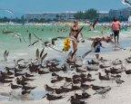 St. Pete Beach birds 9