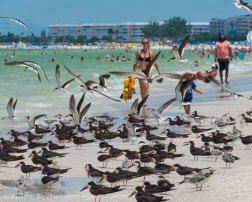 St. Pete Beach birds 9
