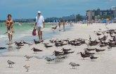 St. Pete Beach birds 10
