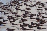 St. Pete Beach birds 11