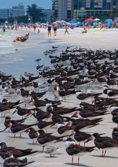 St. Pete Beach birds 6