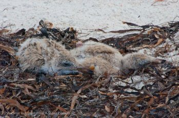 St. Pete Beach birds 21