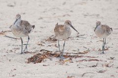 St. Pete Beach birds 16