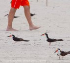St. Pete Beach birds 23