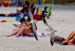 St. Pete Beach birds 24