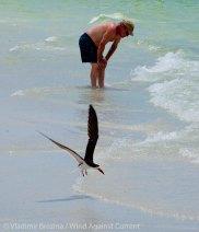St. Pete Beach birds 25