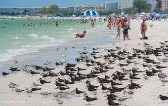 St. Pete Beach birds 5