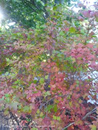 Early Fall Colors 2