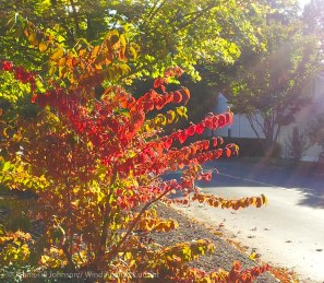 Early Fall Colors 1