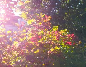 Early Fall Colors 7