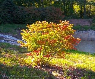 Early Fall Colors 3