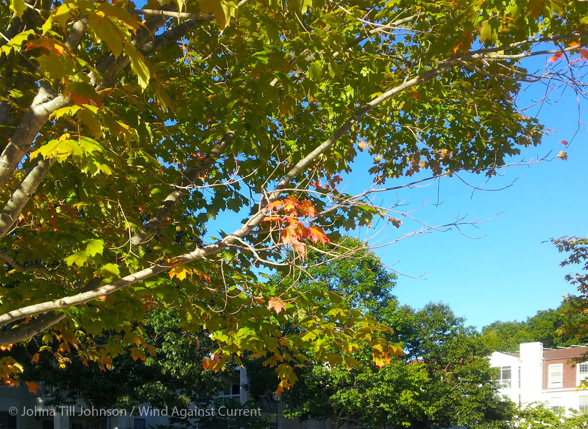 Fall Colors | Wind Against Current