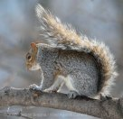 Squirrels 5