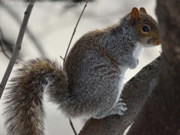 Squirrels 6