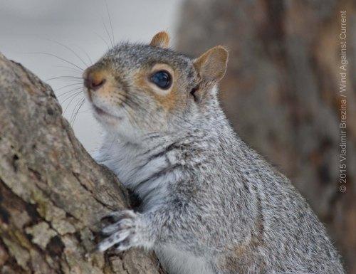 Squirrels 8
