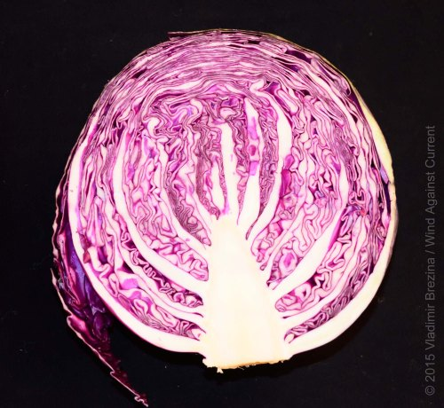Intricate red cabbage 1