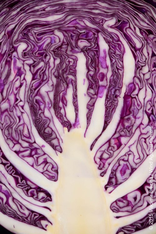 Intricate red cabbage 2
