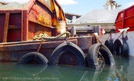 Gowanus Canal 2015 42