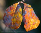 Fall Colors 2015 4