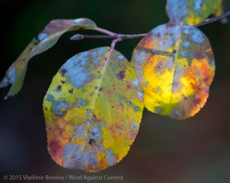 Fall Colors 2015 8