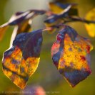 Fall Colors 2015 5