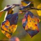 Fall Colors 2015 5