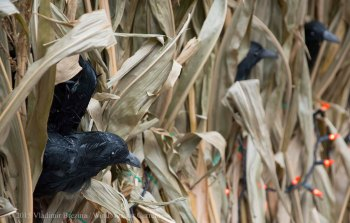 Halloween decorations 2015 12