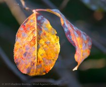 Fall Colors 2015 11