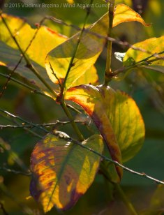 Fall Colors 2015 15