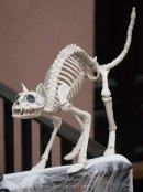 Halloween decorations 2015 18
