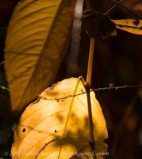 Fall Colors 2015 14