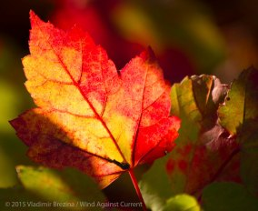 Fall Colors 2015 13
