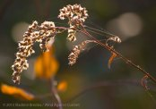 Fall Colors 2015 19
