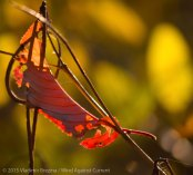 Fall Colors 2015 17