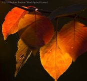 Fall Colors 2015 18