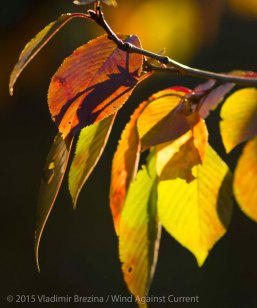 Fall Colors 2015 16