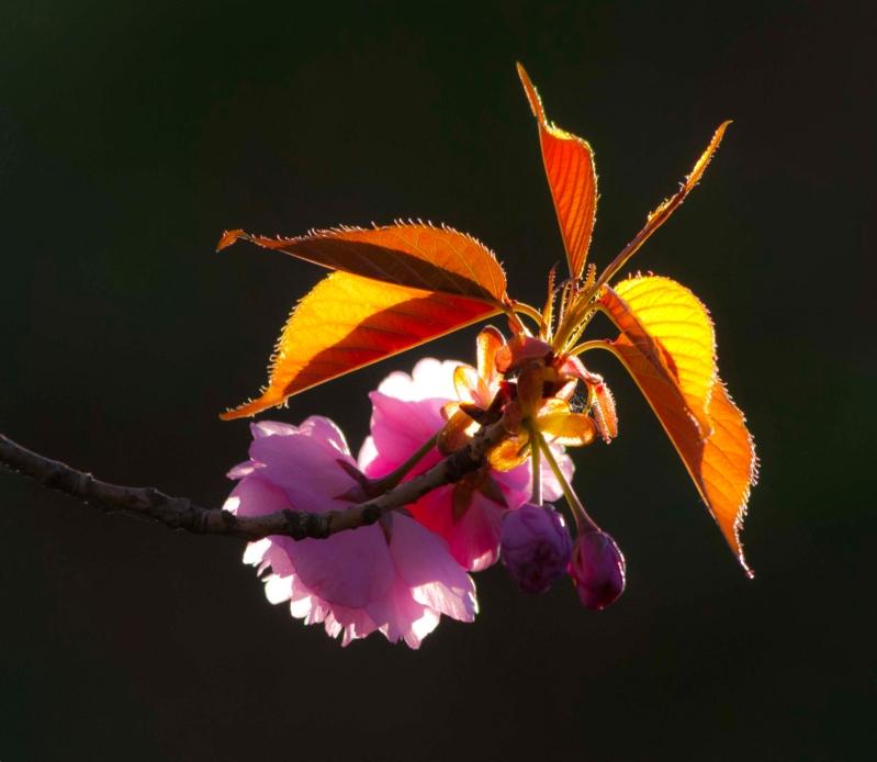 backlit-flower