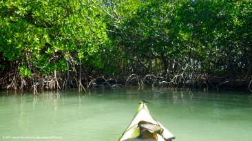 green-mangroves