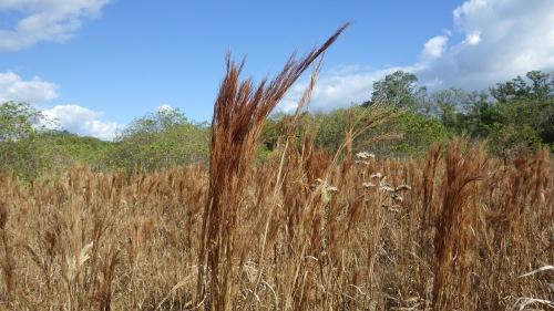 indian-mound-sea-grass